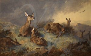 Doe and fawns. Antique deer painting. Fine art print