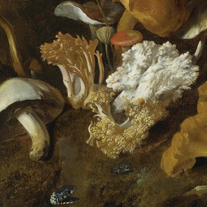 Mushrooms and Fungi. Antique still life painting. Fine art print