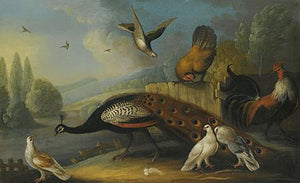Peacock and Birds in a Landscape. 17th century painting. Fine art print