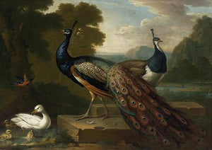 Peacocks and Ducks in an opulent landscape. Antique painting. Fine Art Print