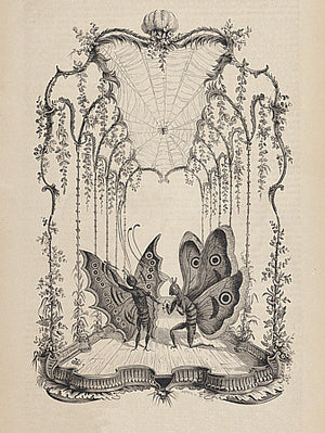 Performing Butterflies antique French engraving. Fine art print