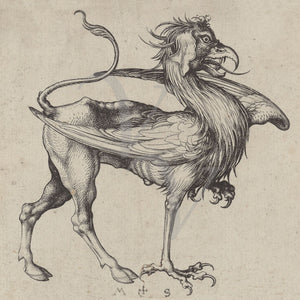 Griffin. Medieval German engraving. Fine art print