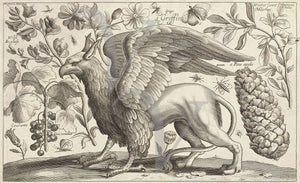 Griffin engraving with botanical decoration. Fine art print