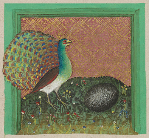 Painting of a peacock and a hedgehog from a Medieval manuscript of animal fables, Fine art print