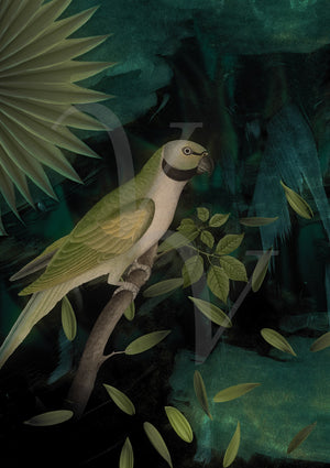 Night Parrot. Green nocturnal forest bird collage. Fine art print