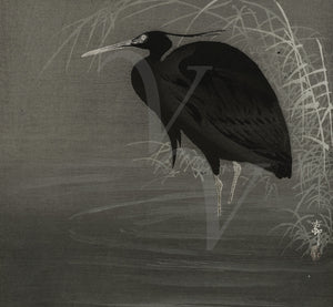 Black Heron Japanese fine art print