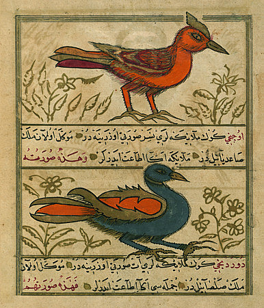 Angel Birds from antique Ottoman Turkish manuscript. Fine art print