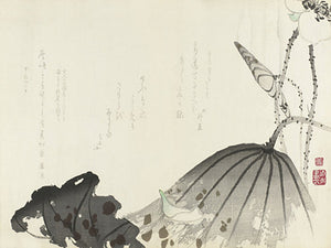 Japanese Lotus Leaves. Antique artwork Fine Art print
