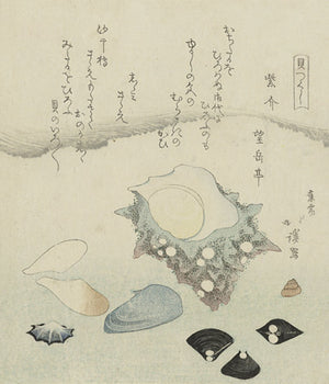 Shells and Clams. Japanese Woodcut. Antique Asian Beach Fine Art Print