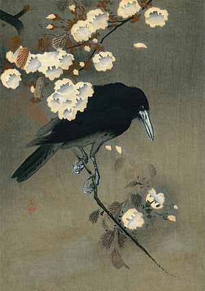 Crow and Blossoms. Japanese woodblock print by Ohara Koson. Fine art print