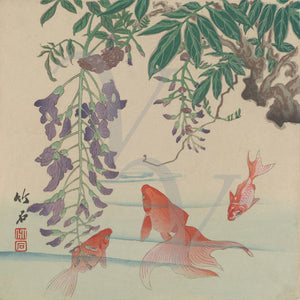 Japanese woodblock print of a goldfish and wisteria. Antique Asian nature. Fine art print