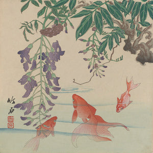 Japanese woodblock print of a goldfish and wisteria. Fine art print