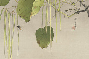 Japanese woodblock print of Catalpa Pods and a Bee by Watanabe Seitei. Fine art print