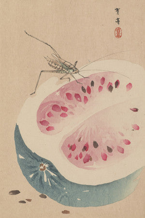 Insect and Watermelon by Watanabe Seitei. Antique Japanese painting. Fine art print