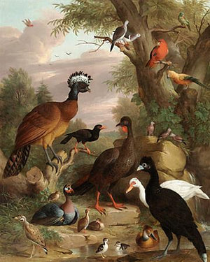 Assembly of Birds. Antique painting. Fine Art print