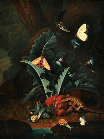 Dark Forest Floor with Reptiles. Antique painting at Venus art prints