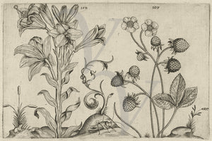 Lily and Strawberry Plant. Vintage Garden Engraving. Fine Art Print