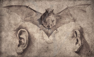 Bat and Ears. 17th century illustration. Oddities and Curios. Fine art print