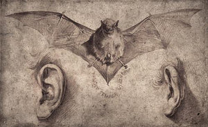 Bat and Ears. Antique illustration. Oddities and Curios. Fine art print