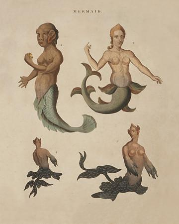 Mermaids and Mermen - Venus Art Prints