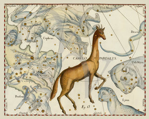 Camelopardalis. Vintage astronomy. Star map. Fine art print