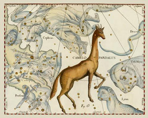 Camelopardalis constellation. Antique astronomy. Celestial chart. Fine art print