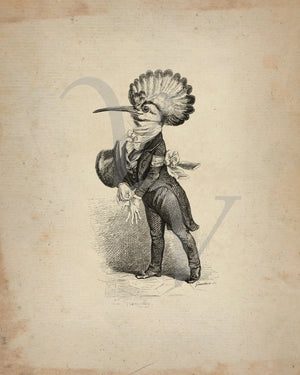 Hoopoe Bird by J. J. Grandville. Animal Oddities. Anthropomorphic. Fine Art Print