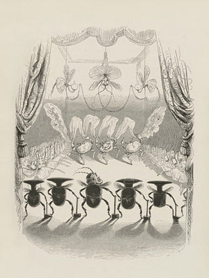 Performing Beetles and Crabs by J.J. Grandville. Fine Art Print