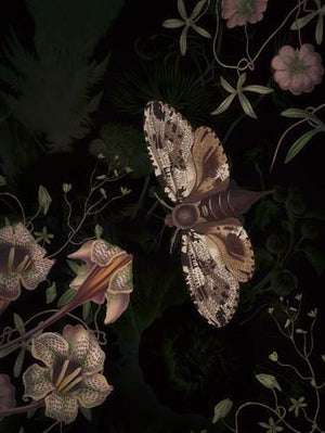 Wildwood. Forest moth with dark florals. Fine art print