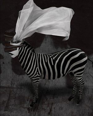 Zebra woman. Surreal animal collage. Fine art print