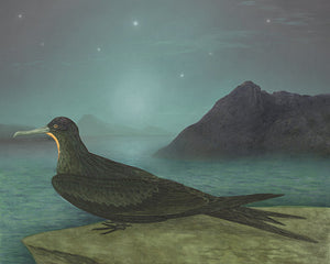 The Navigator. Sea bird under night sky with stars. Fine art print