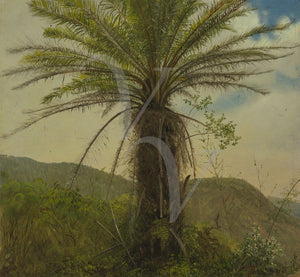 Antique painting of a tree fern. Fine art print