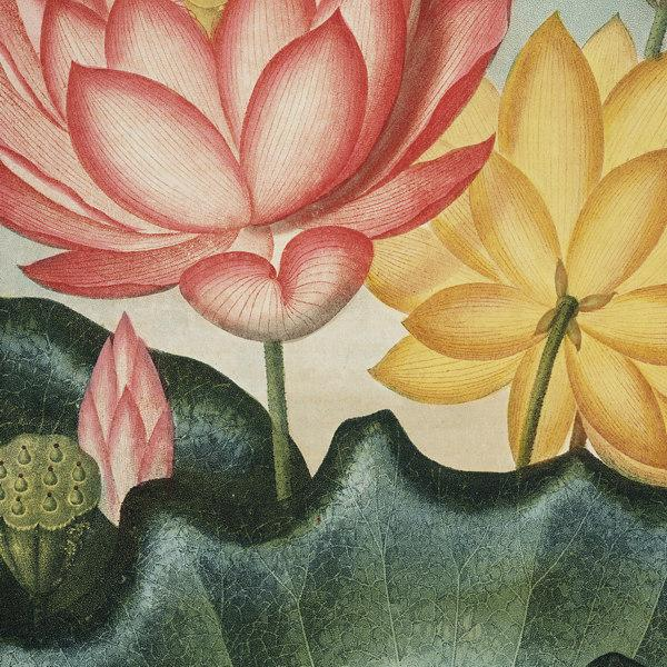 Antique Vintage Flowers - Water Lily - Venus Art Prints