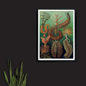 Sea Worms - Venus Art Prints