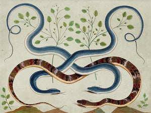 Exotic Snakes. Antique natural history illustration. Fine art print