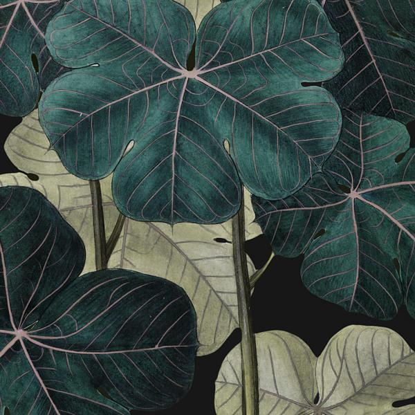 Exotic Leaves