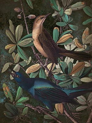 Morning Song. Dark forest birds collage. Fine art prints