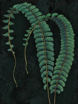 Walking Maidenhair Fern - Venus Art Prints