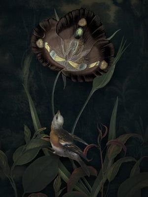 Wonder. Dark forest bird with exotic flower collage. Fine art print