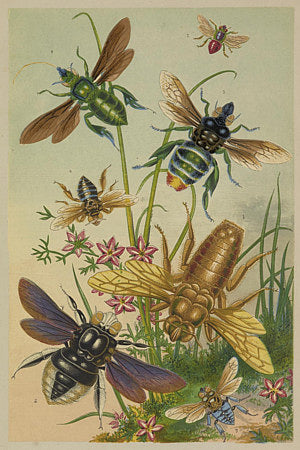 Bees and other flying insects. Victorian natural history illustration. Fine art print
