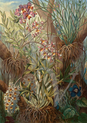 Wild Orchids. Exotic tropical jungle flowers. Vintage botanical. fine art print