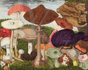 Natural history illustration of edible mushrooms and fungi. Fine art print