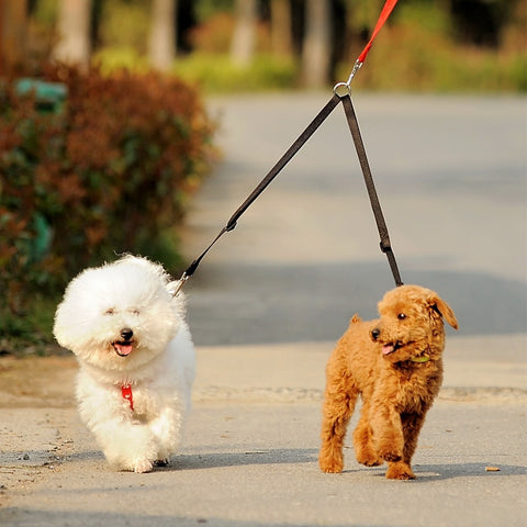 Double Twin Lead Walking Leash COUPLE - trendymal.com