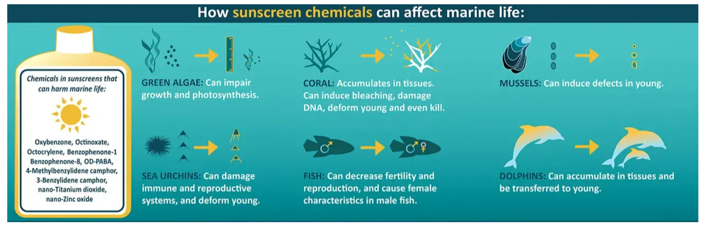 Sunscreen damage to oceans