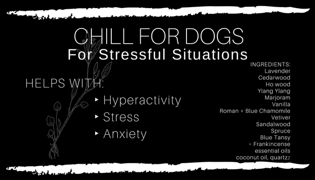 CHILL FOR DOGS Oil 1