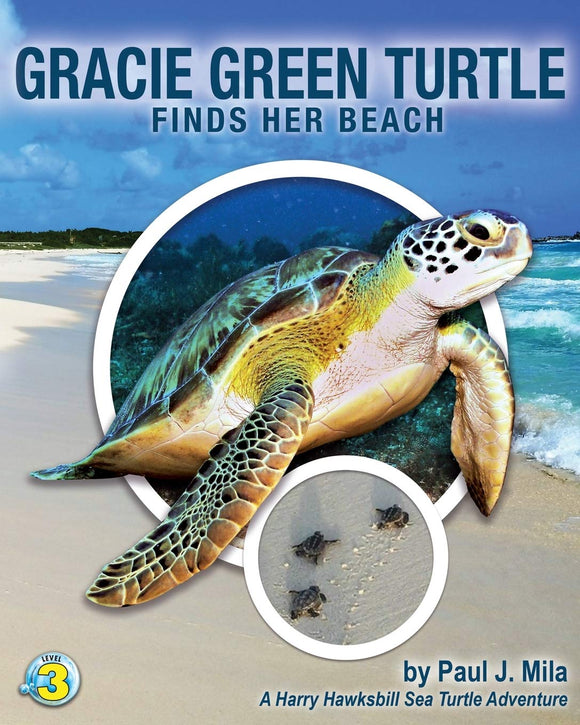 Grace Green Turtle Finds Her Beach