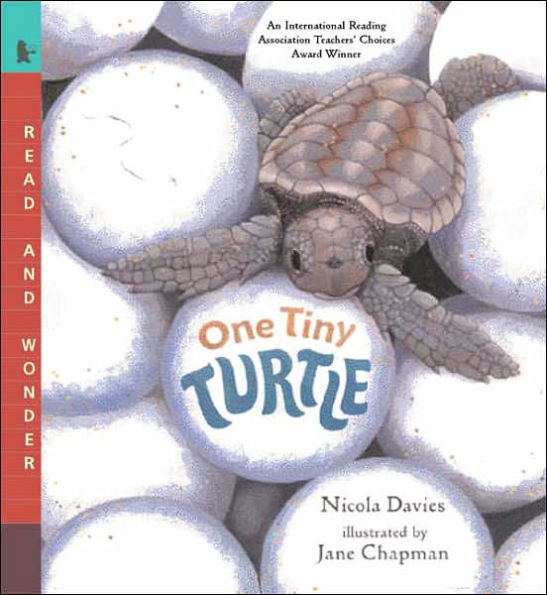 One Tiny Turtle cover