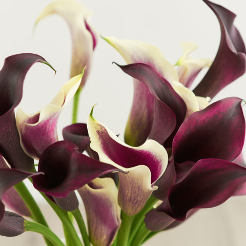 purple calla lily flower meaning