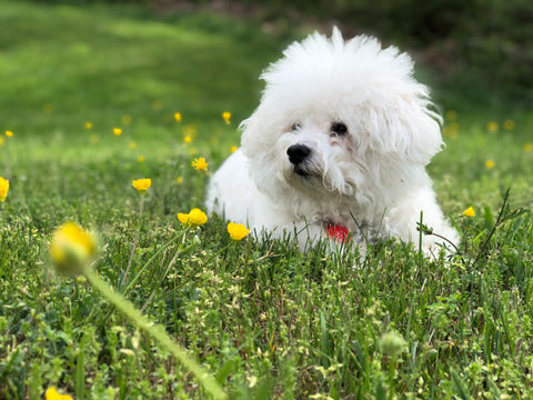 happy dog outdoors with flowers