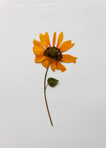 pressed sunflower art